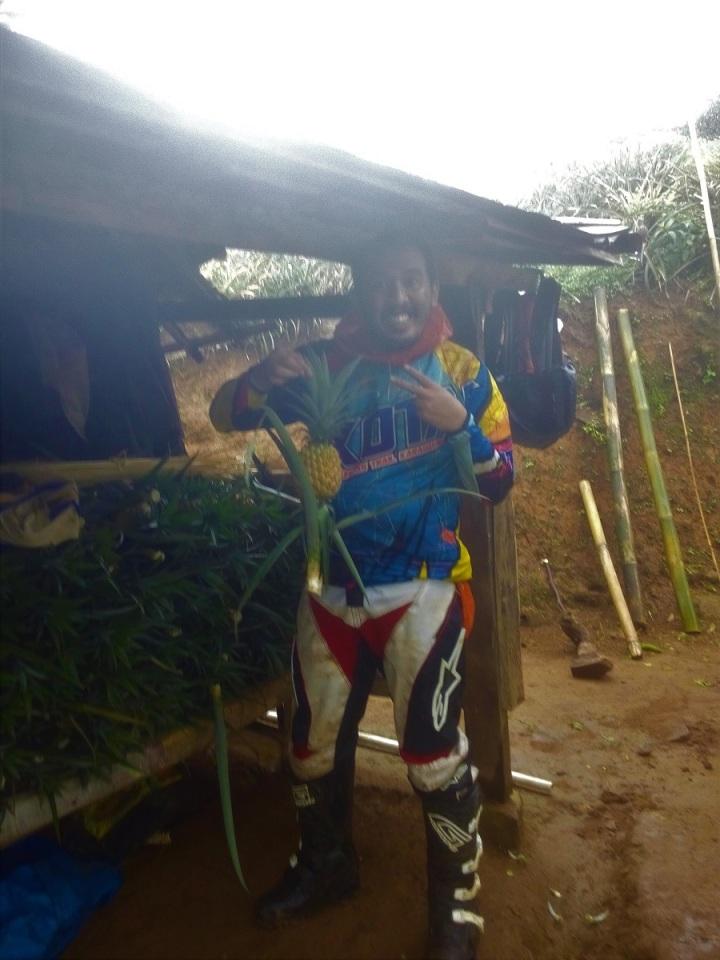 Membeli Nanas langsung dari petani nya, nanas Madu yang lezat